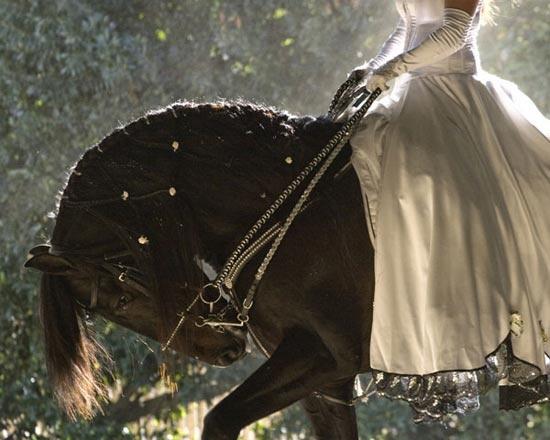 Сънуват ли конете цветове?