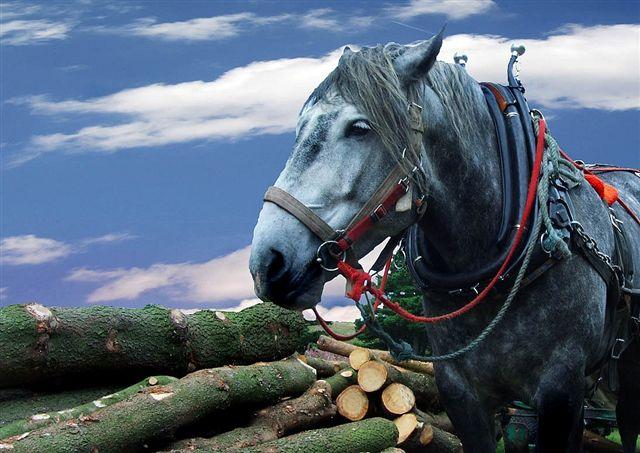 Фактори, влияещи на работоспособността на коня
