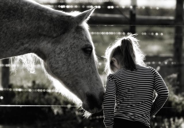Как конете помагат за изграждането на характер