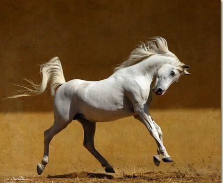 Десет факта за конете