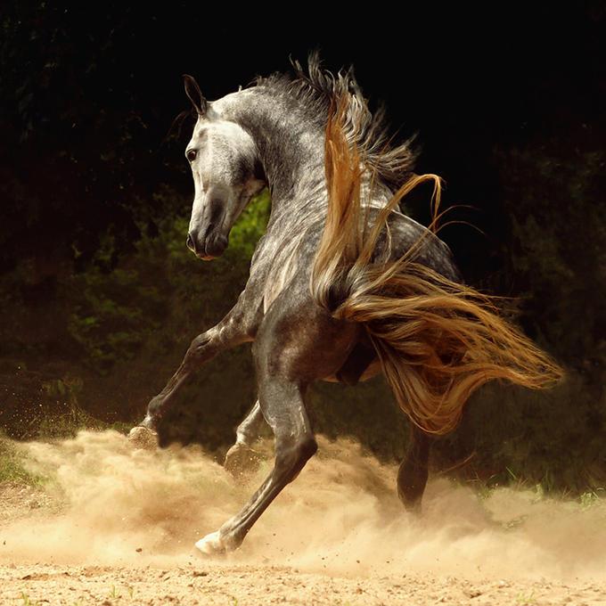 Цитати от известни личности за коне