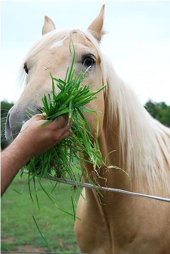 Видове храни на конете