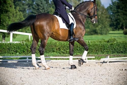 Тренировъчна скала за коня