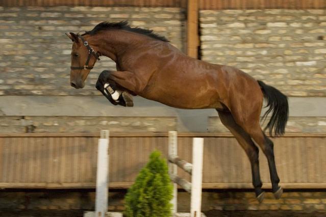 Тренинг и изпитване на конете