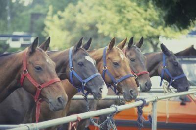 Как да приучим коня да стои вързан – Част III