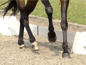Алюри - движения на коня
