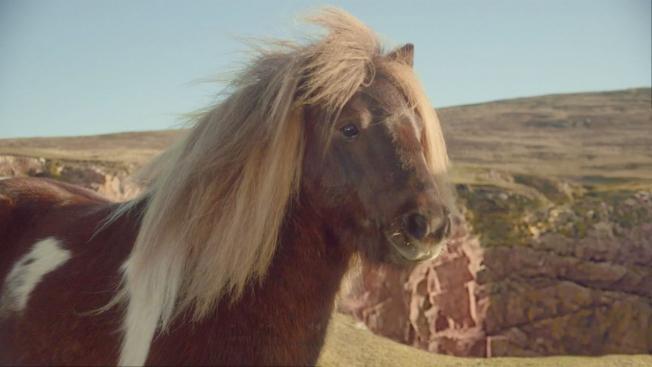 Пони, имитиращо Майкъл Джексън, взриви нета