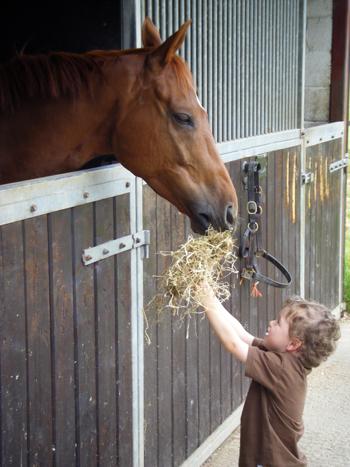 Изисквания за правилно хранене на конете
