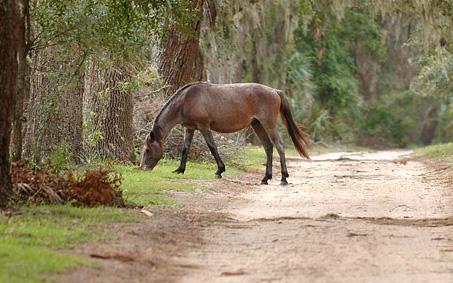 Габрово конна база