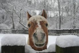Грижи за коня  през зимата