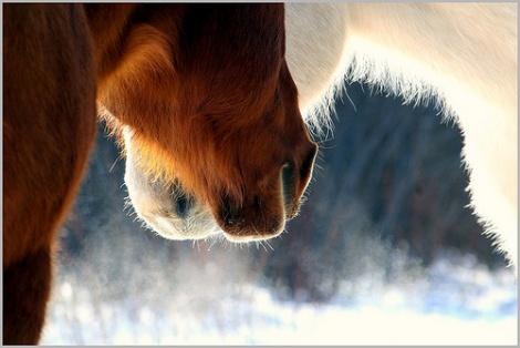 Конете се нуждаят от различна диета през зимата